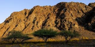 Desert vegetation in Oman Royalty Free Stock Images