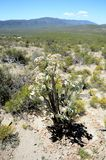 Desert Vegetation Stock Images