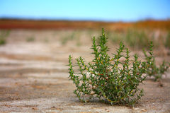 Desert view Royalty Free Stock Photos