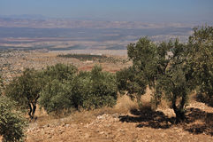 Desert view. Small trees, bushes, at desert view, in Syria from St. Simeon Royalty Free Stock Image