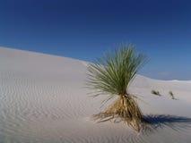 Desert view. A lonley desert plant stock image
