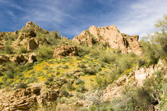 Desert view. Scenic view of the Sonoran desert wilderness in Arizona Royalty Free Stock Photos