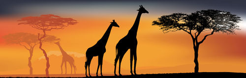 Desert view with giraffes. African fauna and flora. Desert view with giraffes. Background with African fauna and flora Royalty Free Stock Photo