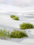 In desert Stock Image