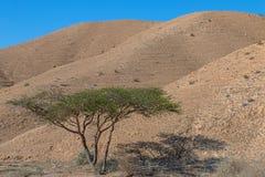 Desert views Stock Images