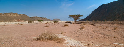 Desert views in Timna Park Stock Photography