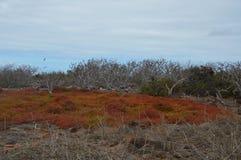 Desert volcanic landscape. Galapagos landscape desert volcanic area Royalty Free Stock Photo