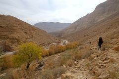 Desert wadi in Judea mountains. royalty free stock photography