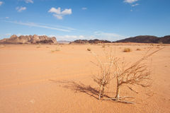 Desert of Wadi Rum Royalty Free Stock Photo