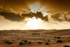 Desert Wahiba Oman Royalty Free Stock Images