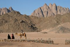 Desert walk Royalty Free Stock Image