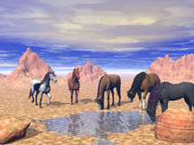 Desert Watering Hole. 5 wild horses coming to a desert watering hole, 3d model, computer generated Stock Photography
