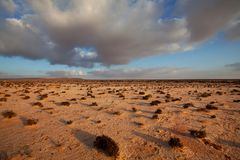 Desert in Western Sahara Royalty Free Stock Photos