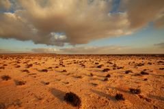 Desert in Western Sahara Stock Photography