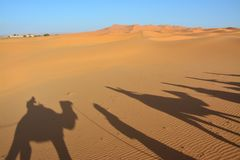 Desert, people on camels, the Western Sahara in Morocco. Africa stock photos