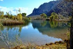 Desert Wetland Stock Image