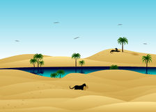 Desert and wild cats. The desert, dunes from sand, the lake and wild cats Royalty Free Stock Photos