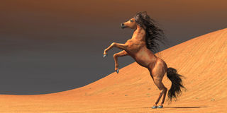 Desert Wild Horse Royalty Free Stock Photography