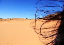 Desert Wind Stock Image