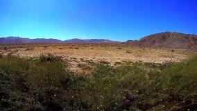 Desert Winds Joshua Tree Park California. USA stock footage