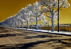 Deserted. Infrared image of a deserted, tree-lined street Stock Photos