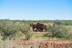 Deserted adapted elephants in bush. In Torra Conservancy Namibia stock photo