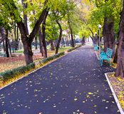 Deserted avenue 1. Early autumn in morning park Stock Image