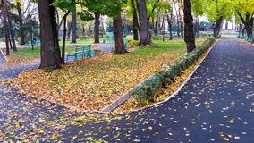 Deserted avenue 2. Early autumn in morning park Royalty Free Stock Images