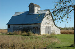 Deserted barn with apple tree Royalty Free Stock Photos
