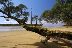 Deserted beach,. Curio Bay, Southland, South Island, New Zealand Royalty Free Stock Photo