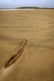 Deserted beach,. Curio Bay, Southland, South Island, New Zealand Stock Image