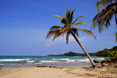 Deserted Beach. A lone palm tree leans out over a deserted beach in Eastern Costa Rica Stock Image