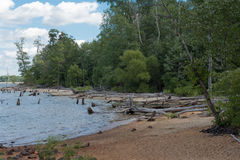 Deserted Beach. A deserted and abandoned beach with dead trees in the water, surrounded by woods under a blue sky Royalty Free Stock Images