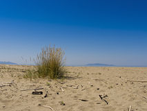 Deserted beach getaway, escape - sandy with driftwood, islands Royalty Free Stock Photo