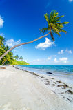 Deserted Beach and Palm Trees Royalty Free Stock Photo