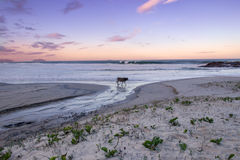 Deserted beach with pet Royalty Free Stock Image