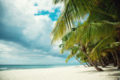 Deserted beach on an island with white sand. Palm trees royalty free stock image