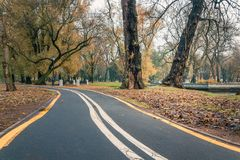 A deserted bike path in the autumn morning city park. A deserted bike path in the autumn morning city public park stock images