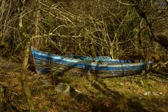 Boat in forest. Deserted blue row boat among trees Royalty Free Stock Images