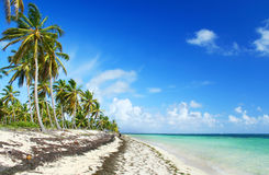 Deserted Caribbean Beach. Fringed with palm trees Stock Photos