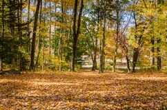 Forest with the Ground covered in Fallen Leaves on a Sunny Autumn Morning Stock Photos