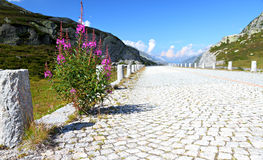 Deserted cobble stone road Royalty Free Stock Photos
