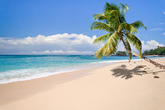Deserted island. Desert island with palm tree on the beach Stock Image