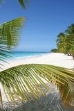 Deserted Island. Saona Island in the Dominican Republic Stock Photography