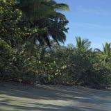 Deserted island Royalty Free Stock Photography