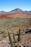 Deserted landscape of teide national park on tenerife, canary islands in spain Stock Image