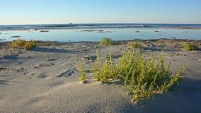 Deserted ocean beach in early morning Stock Image