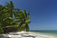 Deserted palm-fringed  tropical beach Royalty Free Stock Images