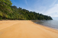 Deserted paradise beach lined with rich green trees. A deserted golden sand beach lined with rich green trees and calm sea Stock Photography