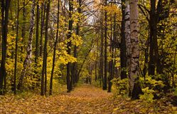 Deserted path in deciduous autumn forest Stock Images